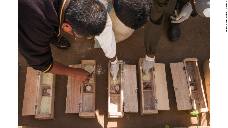 Officers from the Ministry of Public Health work on rat traps in a primary school in Antananarivo.