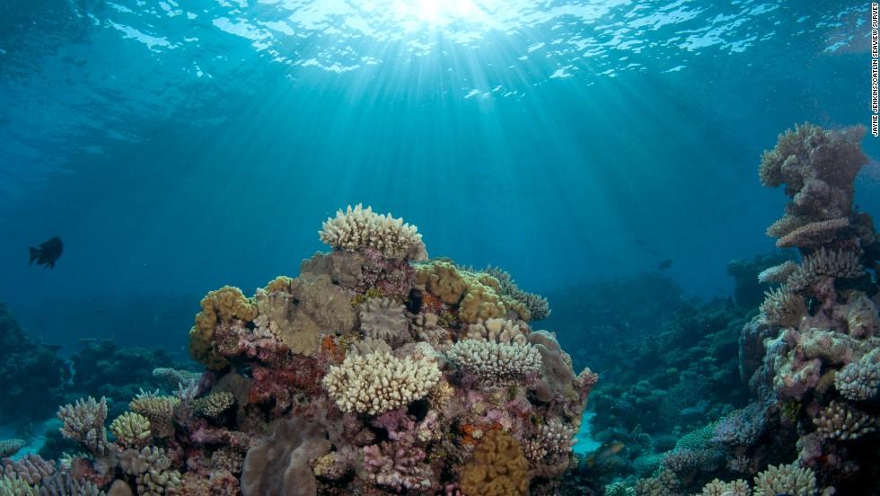 Best Islands To Study Marine Biology