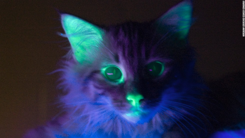 Cyborg bugs and glow-in-the-dark cats: How we're ...