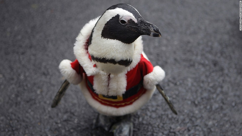South Korea Christmas Penguin March Cnn Com