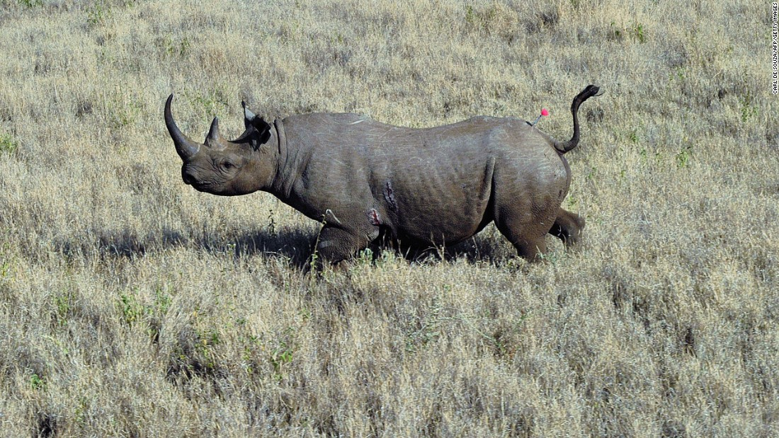 what is the difference between a poacher and a hunter