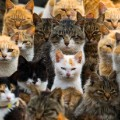 12 internet cats restricted
