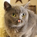 18 internet cats