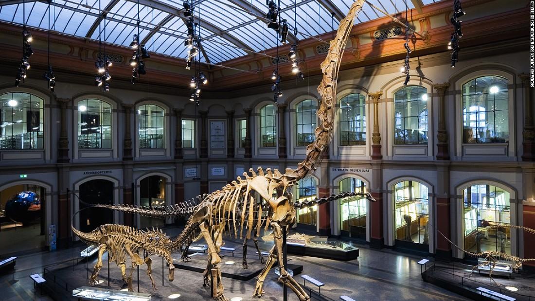 Museum Of Natural History Dinosaur Egg