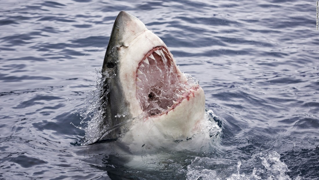 Great White Mouth 8