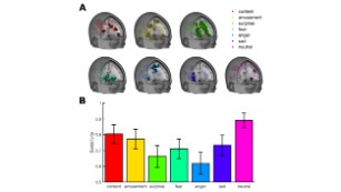 This is what emotions look like in your brain