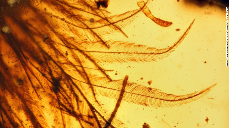The amber adds to fossil evidence that many dinosaurs sported feathers rather than scales.