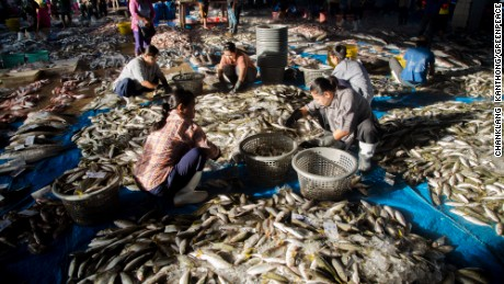 Burmese workers sort freshly-landed fish at the public fishing port in Ranong, southern Thailand.