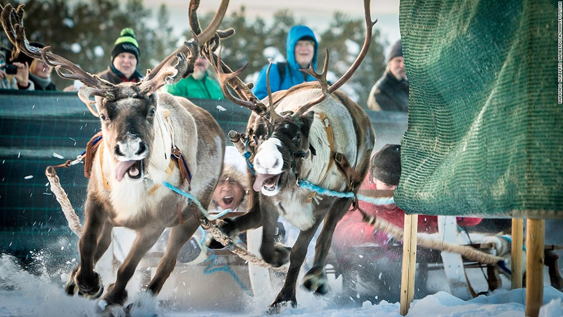 Italian photographer Raimondo Norberto Giamberduca, earned a Highly Commended in the New Talent, Eye to Eye category for this image of a reindeer race in Jokkmokk, Sweden.