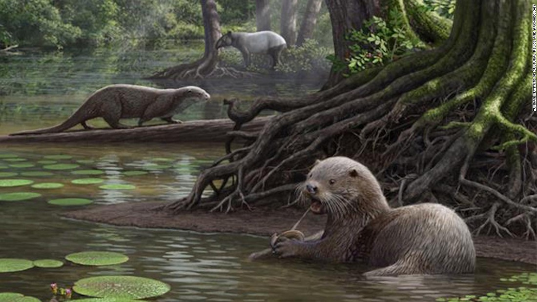 Remains of wolf-like ancient otter discovered in China