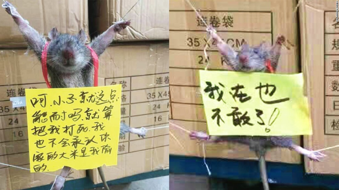 What reaction to a publicly shamed rat says about animal rights in China