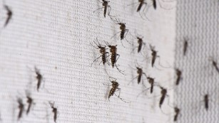 Certain species of mosquitoes also bite during the day, meaning protection is needed at all times.