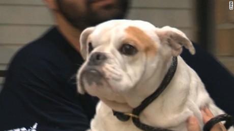 Dog Houston Roof Rescue